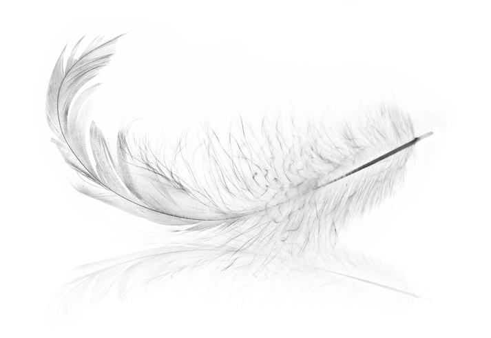 single chick feather with reflection